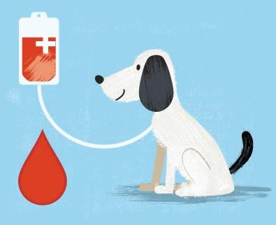 donare-sangue-cane-laudensevet